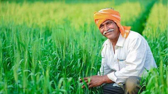 मोदी कैबिनेट ने दिया किसानों को तोहफा! फसल में MSP इजाफे को दी मंजूरी