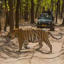 THIS NOVEMBER, THE STAGE IS ALL SET COME EXPLORE…..NATURE AT ITS BEST, THE BEST COMBO OFFER JUNGLE, TIGERS AND BEACH 'ALL IN ONE GO'